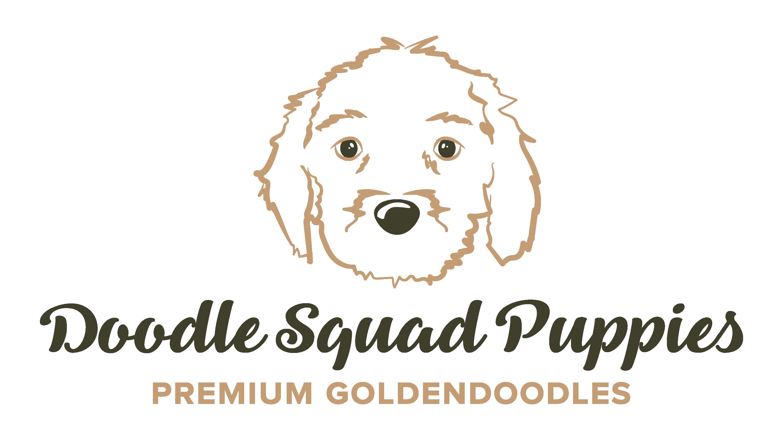 Goldendoodle Puppies For Sale Delaware Ohio Hillsborough Nc